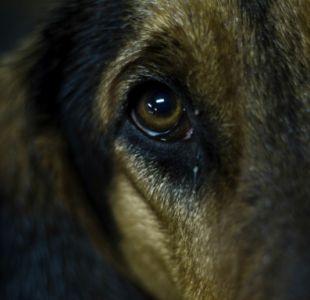 [VIDEO] Brutal maltrato animal en Argentina: conductor arrastra y mata a un perro con su auto