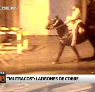 """[Reporteros] """"Mutracos"""": Las bandas que roban cobre a caballo"""