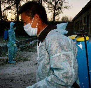 Francia va a sacrificar 600.000 patos más para combatir epidemia de gripe aviar