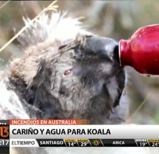 [T13 AM] Bloque internacional: Koala afectado por incendio recibe ayuda y otras noticias