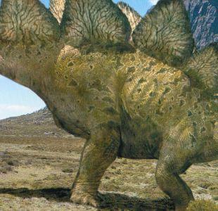 Revelan cuánto habría pesado uno de los dinosaurios más reconocibles