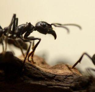 [VIDEO] ¿Robo hormiga? Insecto intenta robar diamante de una joyería
