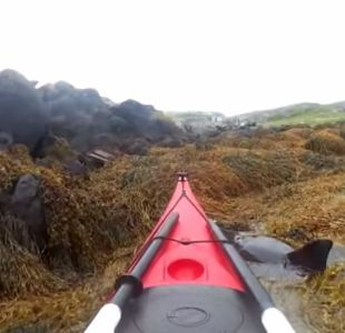 [VIDEO] Hombres en kayak rescatan a delfín atrapado en algas marinas