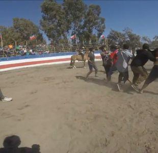 [VIDEO] Protesta contra el rodeo terminó con peleas del público