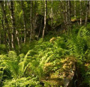 Cómo logró Noruega salvar sus bosques cuando estaban a punto de desaparecer