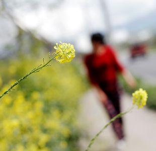 Alergias primaverales: Conoce los niveles de polen en tu ciudad