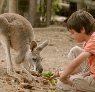 Safari australiano debuta en el Buin Zoo