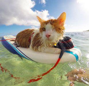 [VIDEO] El adorable gato de solo un ojo al que le gusta surfear