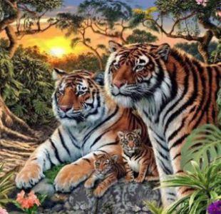 ¿Cuántos tigres ves en esta foto? El reto viral que revoluciona Facebook
