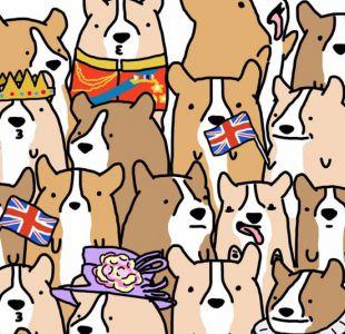 ¿Puedes encontrar a la Reina Isabel II en este grupo perros corgis?