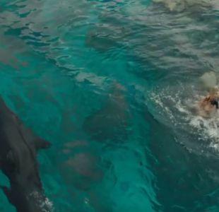 [VIDEO] The shallows, el filme que enfrenta a Blake Lively con el brutal ataque de un tiburón