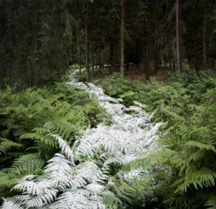 La magia de la unión entre los bosques y la luz, la exposición fotográfica de Ellie Davies