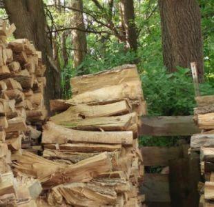 Canadá pide arbitraje en conflicto sobre la madera con EEUU