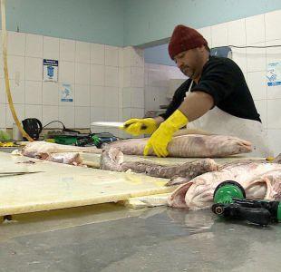 [VIDEO] El renacer del Terminal Pesquero