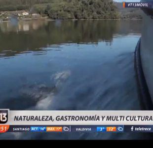[VIDEO] Malleco: Naturaleza, Gastronomía y Multicultura