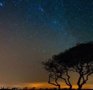 ¿Qué es la lluvia de estrellas Oriónidas, qué tiene que ver con el cometa Halley y cómo verla?