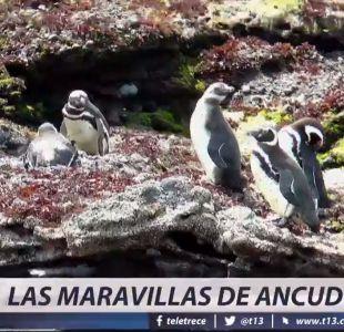 [VIDEO] Las maravillas de Ancud