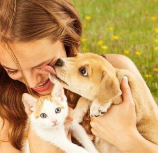 ¿Debemos dejar que nuestro perro o gato nos bese en la cara?