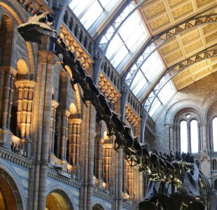 Museo de Historia Natural de Londres dice adiós a su famoso dinosaurio