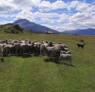 Hay que ir de vacaciones: los imperdibles de Puerto Natales