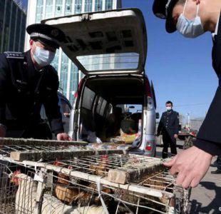 China: más de 20 muertos por gripe aviar desde diciembre
