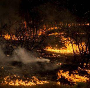 Chile hace frente a los peores incendios forestales en décadas