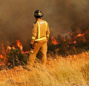 Declaran alerta roja en Lampa por incendio forestal