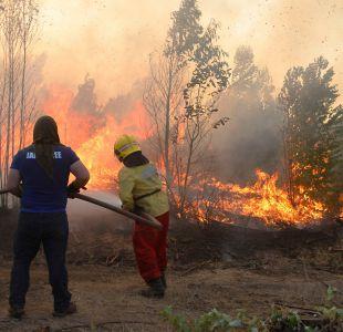 Efecto de incendios en aprobación presidencial se verá en Adimark de febrero