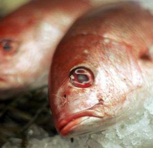 No todas las especies de peces contienen la misma cantidad de mercurio.