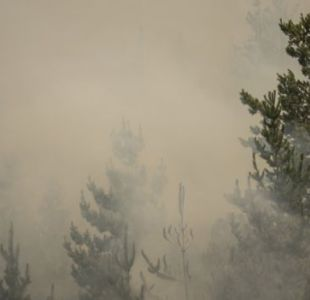 FNE denuncia ante el TDLC cartel de empresas de combate y extinción de incendios forestales