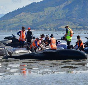 Cadena humana para evitar que más ballenas mueran encalladas en Nueva Zelanda