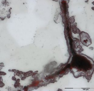 Revolucionario descubrimiento de los microfósiles más antiguos del mundo