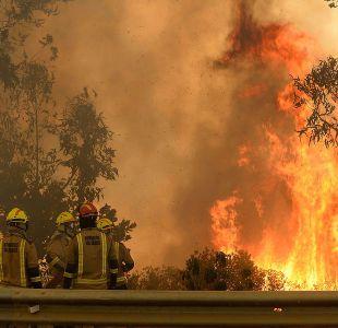 Incendios forestales en Viña del Mar dejan 16 casas destruidas y 230 hectáreas afectadas