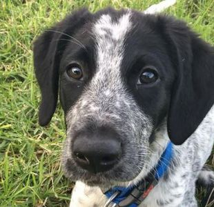 Perro fue abatido a tiros en Nueva Zelanda tras colarse en la pista de un aeropuerto