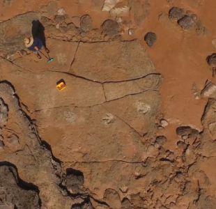 Identifican 150 huellas de 21 especies de dinosaurios en un Jurassic Park de Australia
