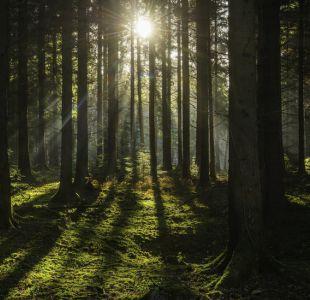 El bosque británico que permitirá saber cómo serán los árboles en el futuro
