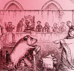 Por qué durante siglos en Europa hubo juicios contra cerdos y ratas