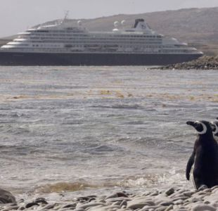 Por qué los pingüinos de las islas Malvinas no activan las bombas de los campos minados que pisan