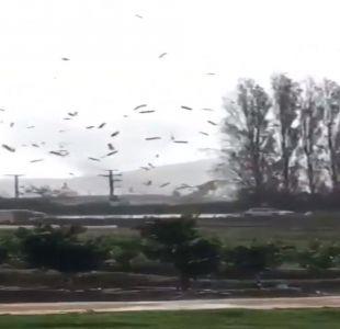Inusual semi tornado provoca cortes de luz y daños en Quillota