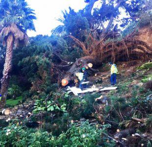 Reloj de flores de Viña del Mar es destruido por caida de árbol