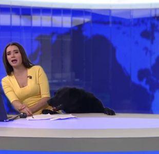 Adorable perro interrumpe a conductora de noticias