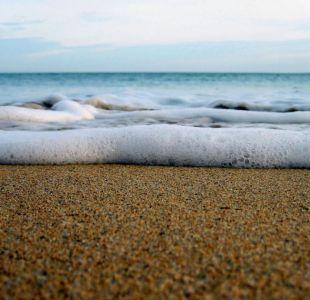 Recogió en la playa lo que pensó era una golosina y terminó salvando a una hermosa especie