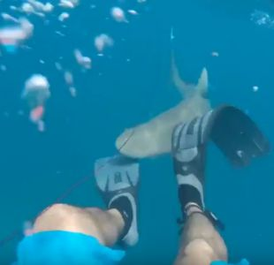 Tiburón muerde a pescador