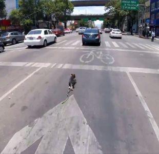 [VIDEO] El impresionante rescate a un perro que corre a toda velocidad por una avenida en México