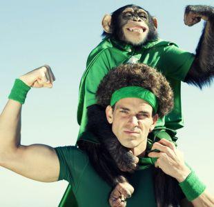 El secreto de por qué los chimpancés son más fuertes que los seres humanos