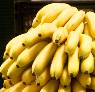 [VIDEO] El plátano es la fruta más consumida por los chilenos
