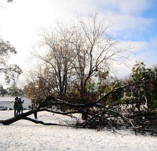 Caída de árbol en Las Condes.