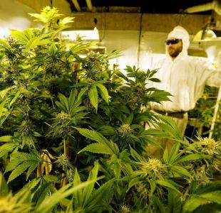 Uruguay inicia venta de marihuana estatal