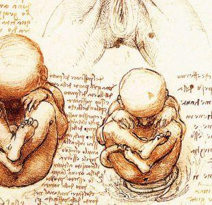 ¿Por qué los científicos tardaron tanto en entender de dónde vienen los niños?
