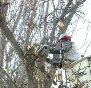 Podan árboles para evitar cortes de luz